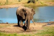 030-Elephant