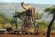 African Spirit SA