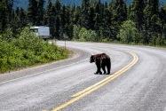 02-Bear.jpg