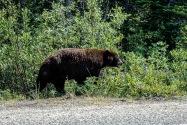 18-Bear.jpg