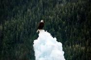 17-Valdez.jpg