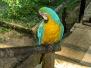 Amazon of Perú