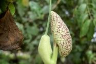 55-seed