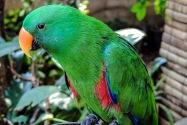 Parrot, Thailand