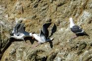 Seagulls, California