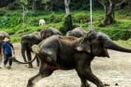 Mae Taeng Elephant Park, Thailand