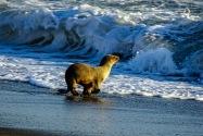 Sea Lion, CA