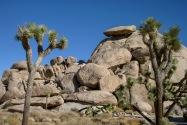 Joshua Tree NP, CA