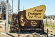 Ancient Bristlecone National Forest CA