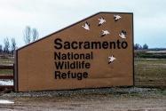 Sacramento National Wildlife Refuge CA