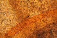 Spitzkoppe Petroglyphs Namibia
