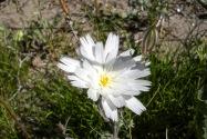 Anza-Borrego Desert SP, CA