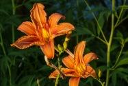 60-SBaba's flowers.umy